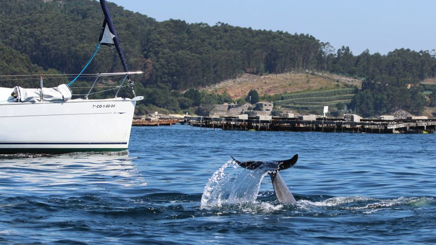 Los delfines sufren acoso estival