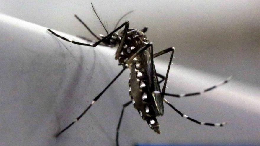 América se blinda contra el Zika para evitar la microcefalia