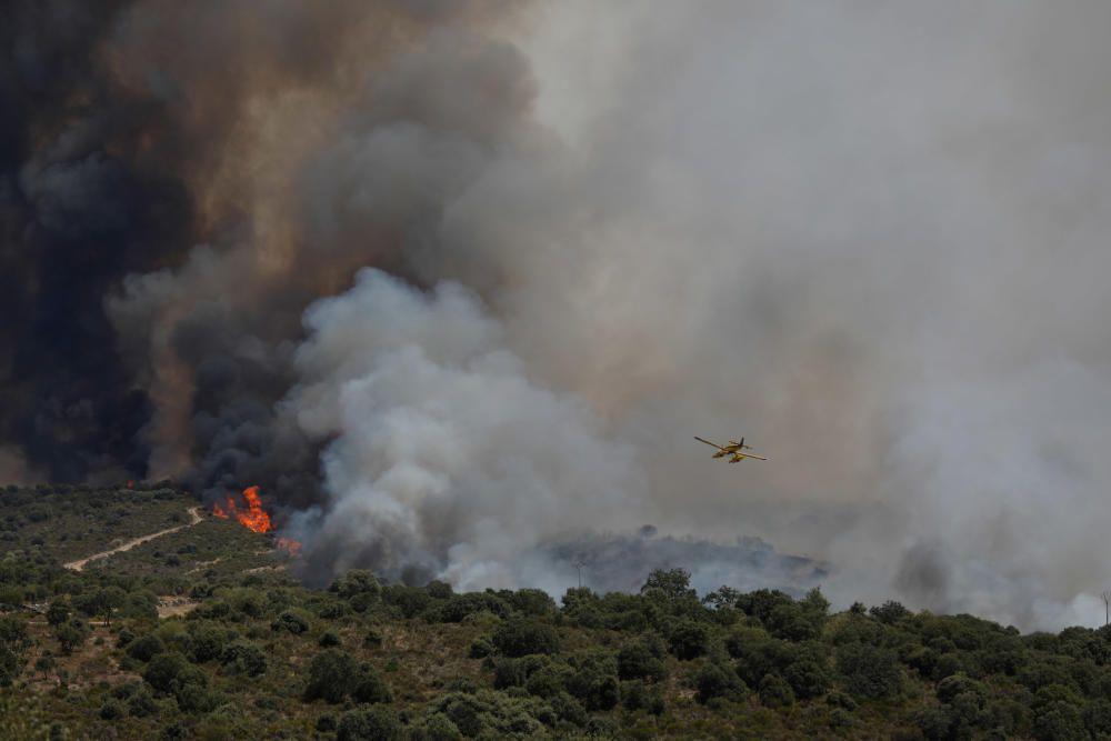 Incendio Pino del Oro y Castro de Alcañices