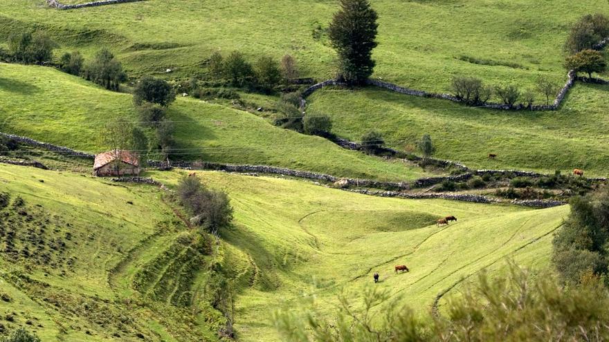 """El """"mapa de riesgos"""" del desarrollo rural: el 68% de Asturias es zona """"preocupante"""""""