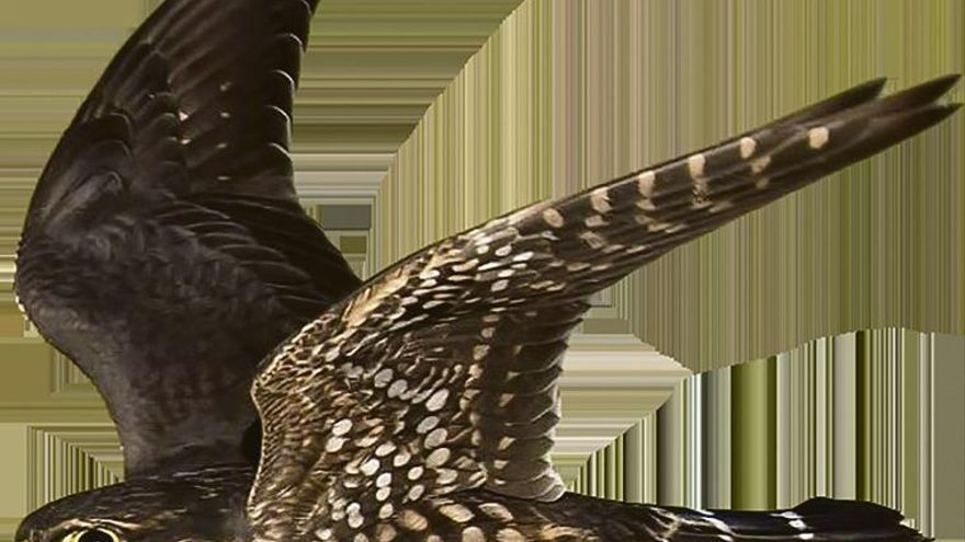 Los pájaros del maíz