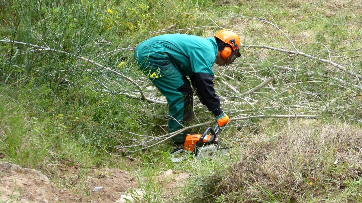 Un trabajador realiza tareas de limpieza de masa forestal en las líneas de distribución eléctrica de Baleares