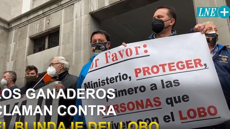 """Los ganaderos claman en Oviedo contra el blindaje del lobo: """"Cada año pierdo la mitad de mi rebaño"""""""