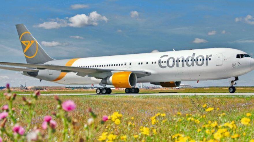 Auch Condor fliegt ab Ende Juni wieder Mallorca an
