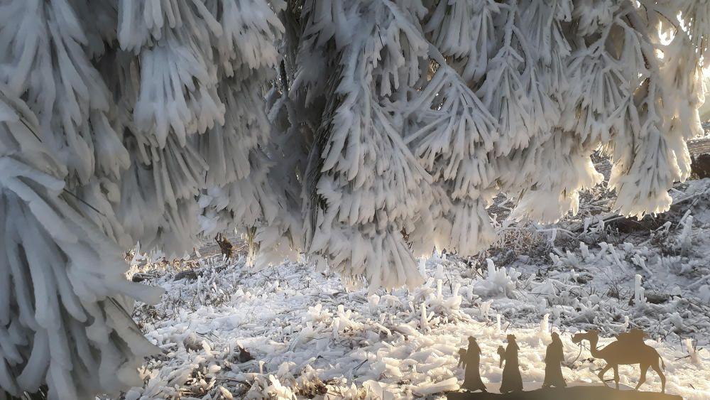 Glaçada. Al municipi de Pinós el paisatge s'emblanqueix a causa d'una glaçada. A la imatge es pot veure com, amb la pujada de les temperatures, el glaç cau a terra i crea una escena nadalenca per on van passar els Reis d'Orient.
