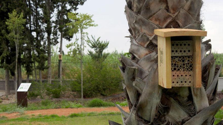 La conservación de los insectos polinizadores; nuevo proyecto ANSE-Aguas de Murcia