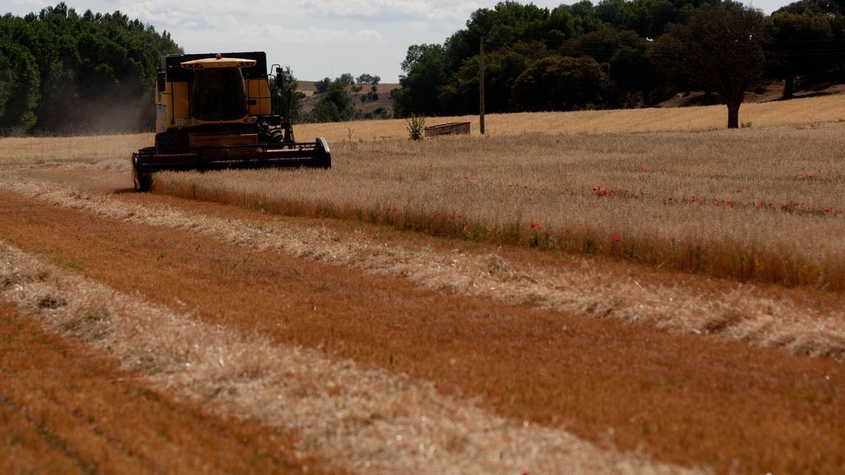 Una cosechadora recoge cereal en un campo de Zamora.
