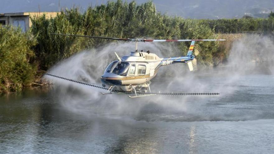 Nuevos tratamientos aéreos intentan mantener a raya    la plaga de mosca negra
