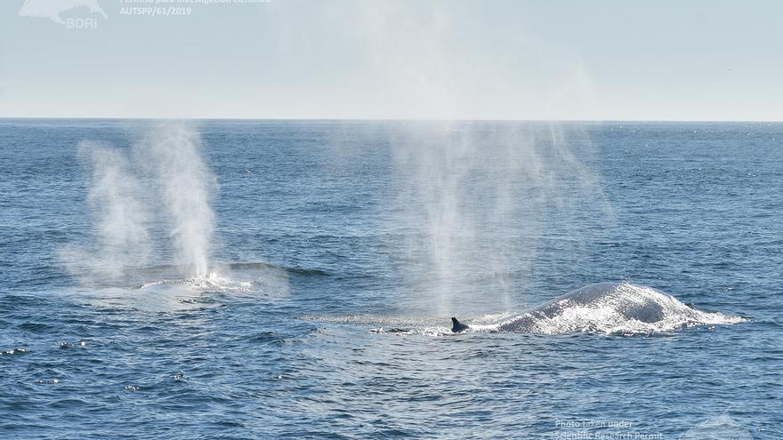 España encuentra en las Rías Baixas una plataforma privilegiada para el estudio de las ballenas