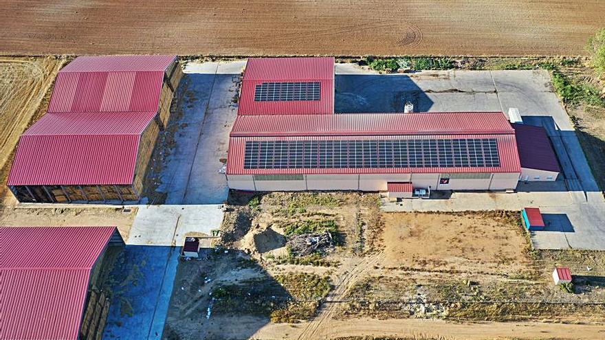 El Consorcio de Ovino abastecerá su fábrica de piensos con energía solar