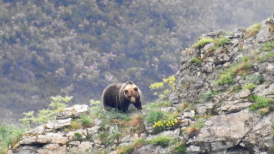 Los lobos y los osos