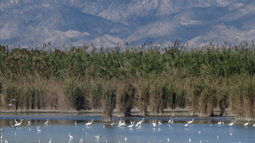 Los ecologistas llevan al Síndic supuestas irregularidades en la gestión de la caza en El Hondo