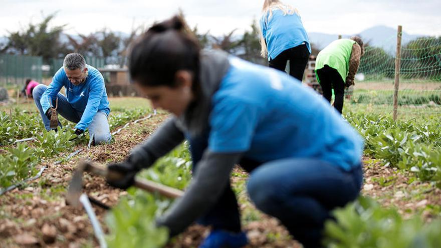 """Voluntarios de """"la Caixa"""" organizan una jornada digital sobre el medio ambiente para familias de toda España"""