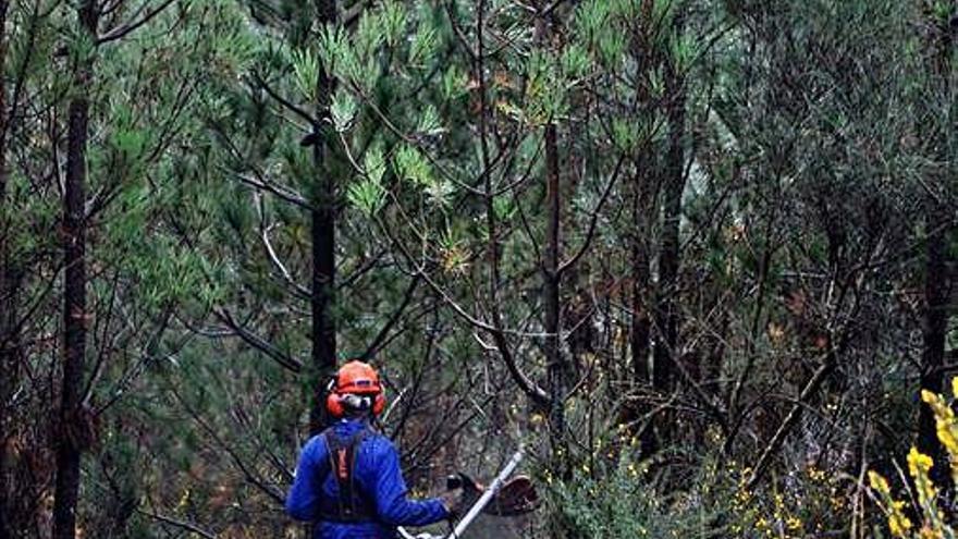La Xunta rastreará con el Catastro fincas sin dueño para expropiarlas tras limpiarlas