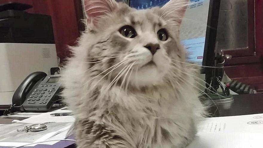 Un juez de Oviedo ordena la custodia compartida del gato de una pareja que rompió su relación