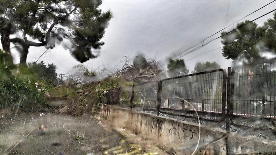 Un árbol cae sobre la catenaria del metro en la Canyada