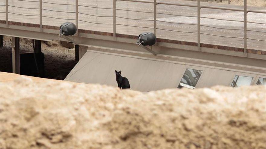 La colonia de gatos del teatro romano de Zaragoza se muda