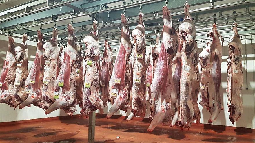 Ternera de Aliste planta cara al Covid con 345.000 kilos de carne vendidos en 2020