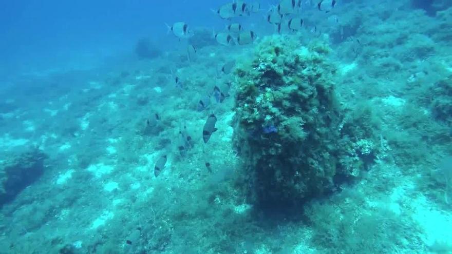 Wieder mehr Fische im Meeresschutzgebiet Dragonera