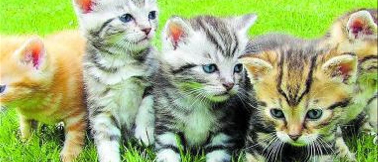 Saber cuidar a los gatos que viven en la calle