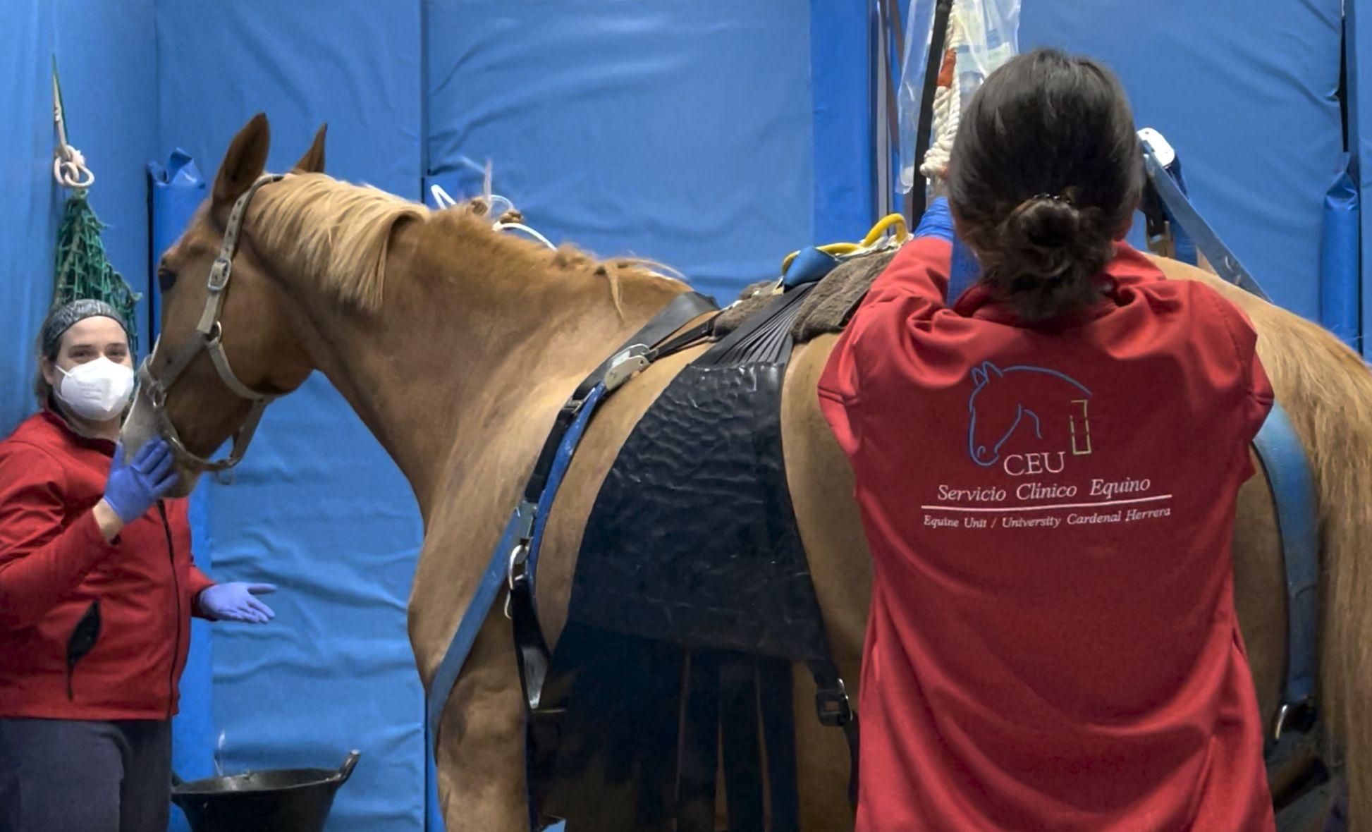 Los caballos afectados por herpesvirus equino tratados en el hospital del la CEU UCH