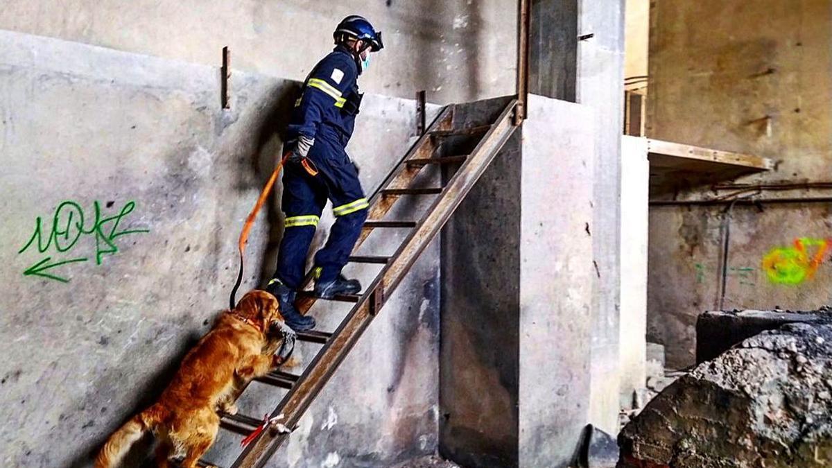 La Unidad Canina de Bomberos ya suma más de 100 intervenciones