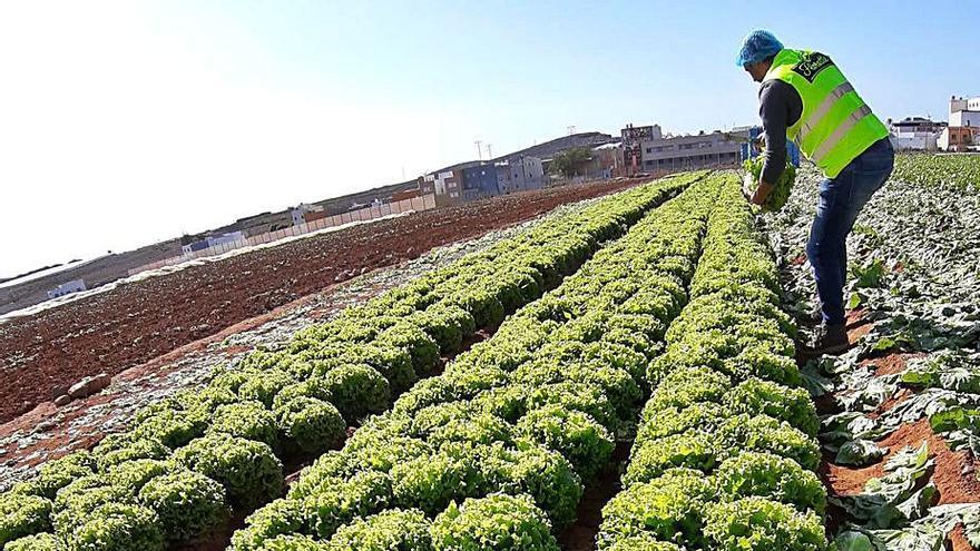 La agricultura 4.0 echa raíces en Canarias