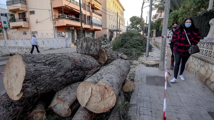 """Los vecinos lamentan el """"exterminio masivo"""" de árboles en la calle Pins de Can Pastilla"""