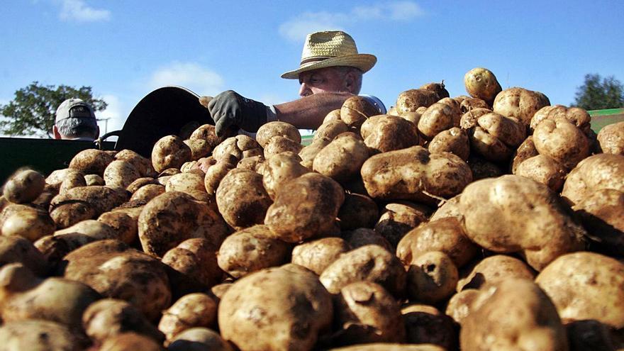 La plaga de la patata llega a Arteixo y se mantiene en siete concellos de A Coruña