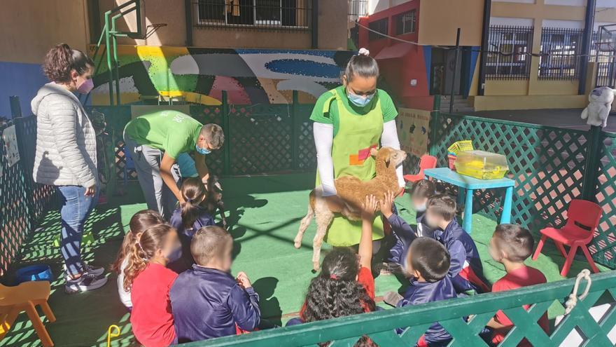 Una mini granja visita los ocho colegios de Los Realejos