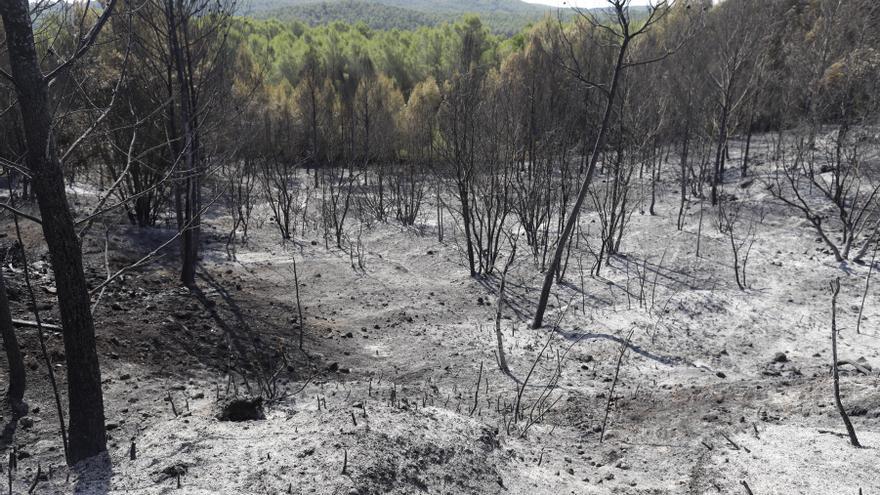 Els Bombers donen per extingit l'incendi de Ventalló