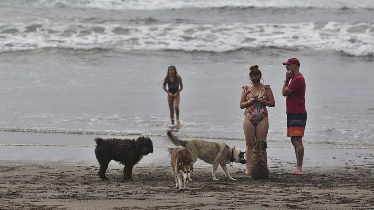 Bañistas con perros en la playa de Bayas en el verano de 2019. | Ricardo Solís