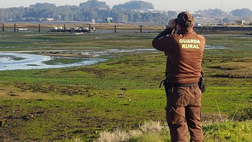 Requisados más de 500 kilos de pescado y marisco en operativos contra el furtivismo en Galicia