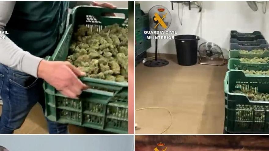 Diez detenidos y cinco productoras de marihuana desarticuladas en Granada