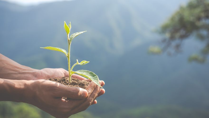 ¿En qué consiste la restauración de ecosistemas?