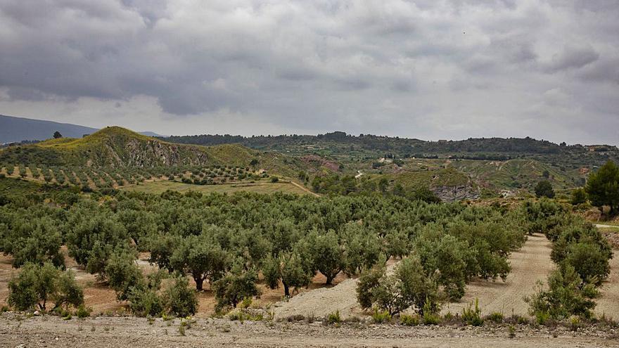 Proyectan otra gran planta solar en la unión de los términos de Chella y Navarrés