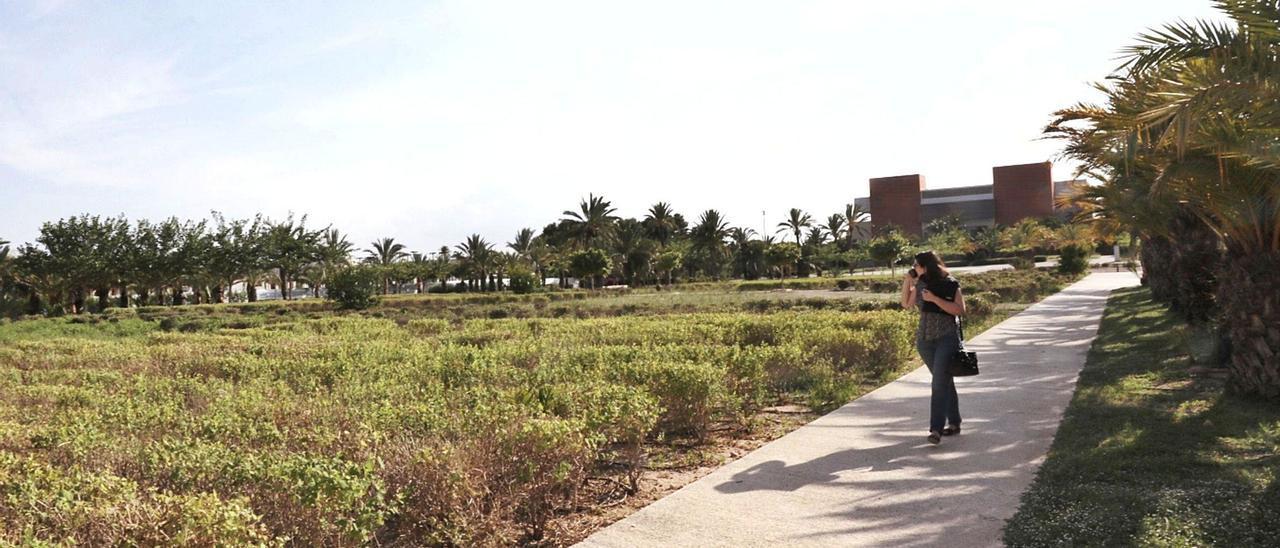 La parcela del campus de Elche de la Universidad Miguel Hernández, con el aulario Altabix al fondo, en la que se construirá el nuevo edificio Perleta.  