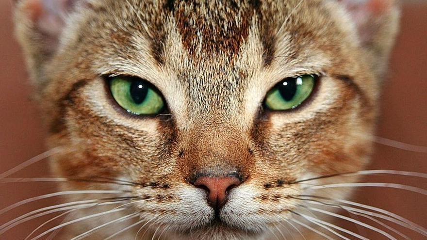 Mi gato es el rey de la casa... pero con FUS