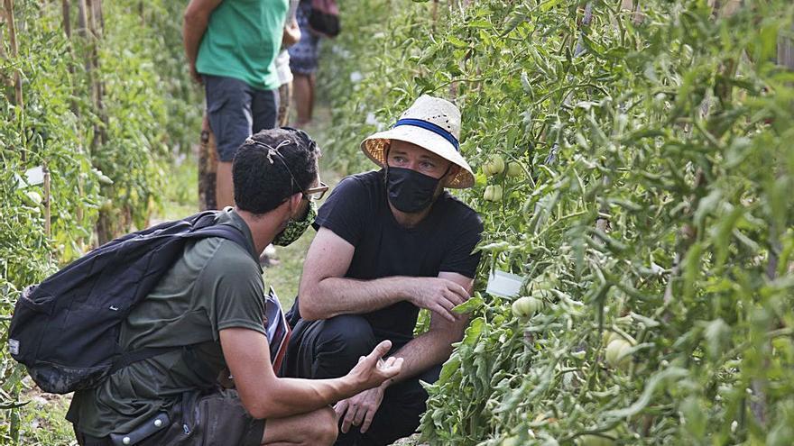 Un estudi científic a Manresa busca potenciar les hortalisses del país
