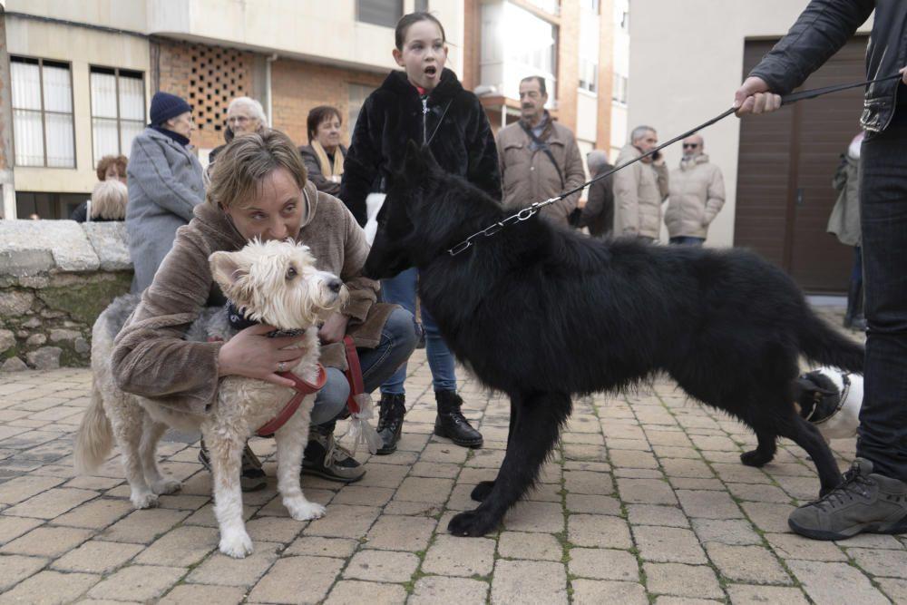 Bendición de animales de San Antón