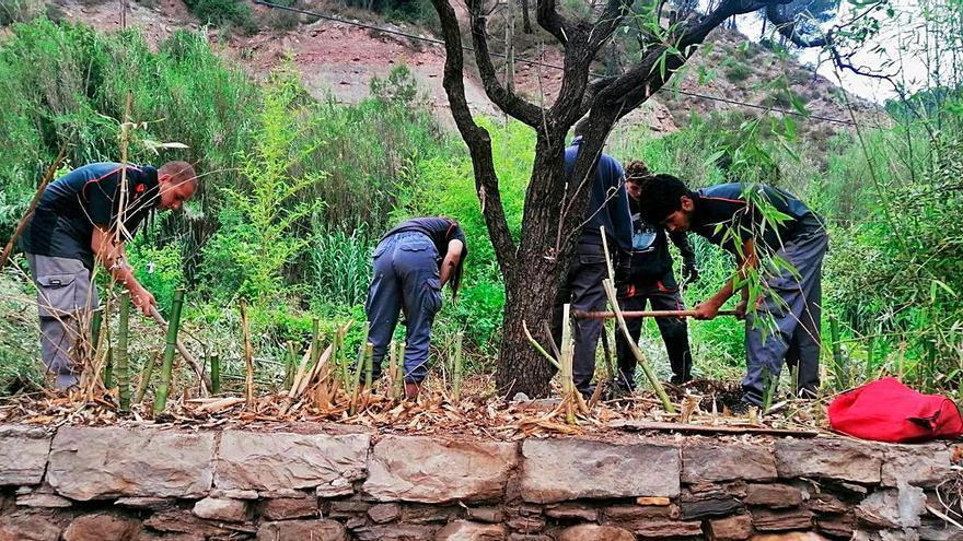 Sallent reorienta cap a l'horticultura el programa de formació de joves