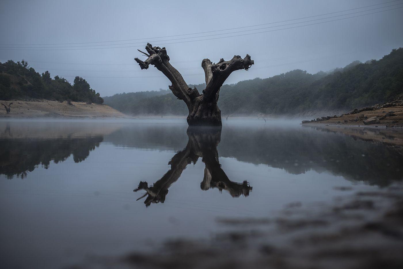 El tronco de un árbol emerge de la presa de O Bao tras la bajada de nivel.  BRAIS LORENZO.jpg