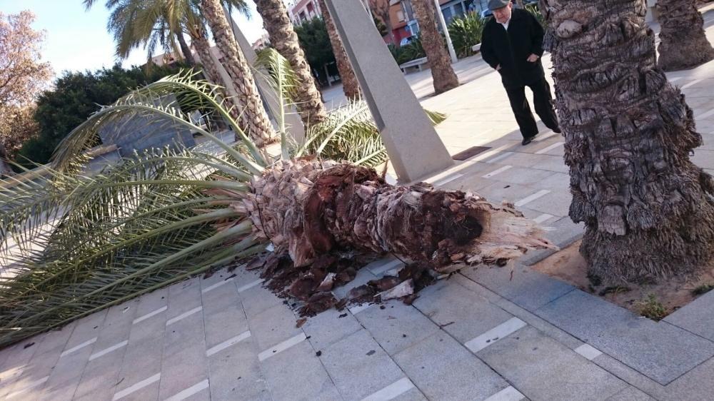 Fuertes rachas de viento causan destrozos en toda