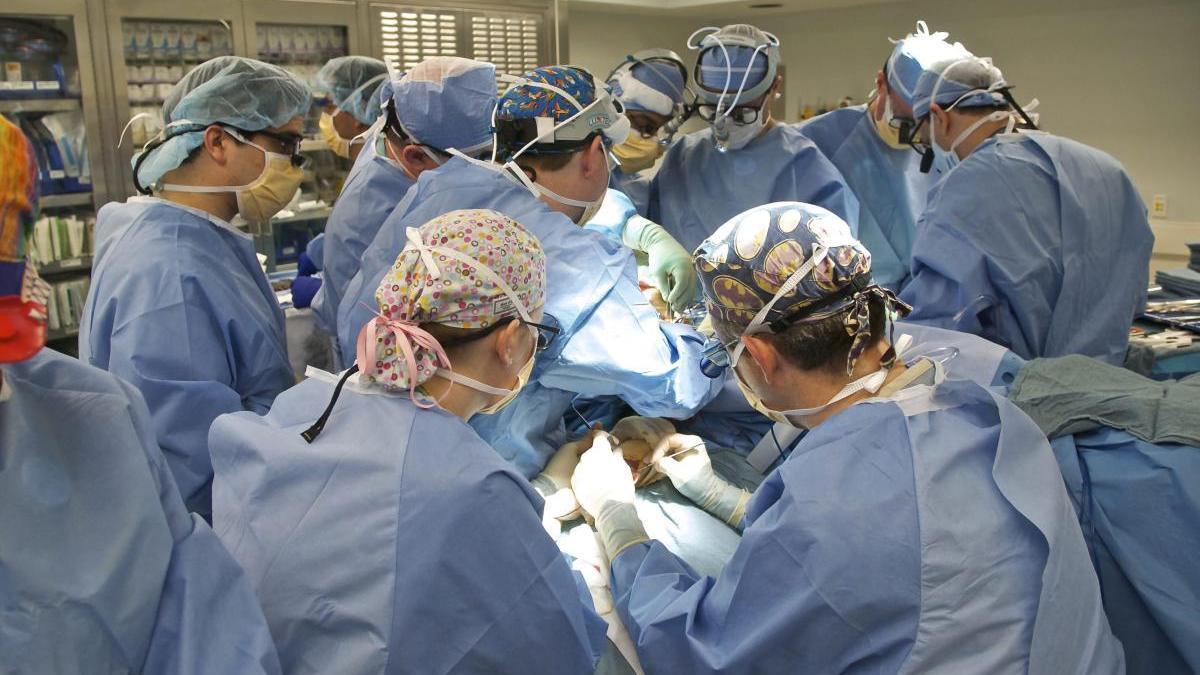 Esta actividad fue posible gracias a las 1.777 personas que donaron sus órganos tras fallecer.