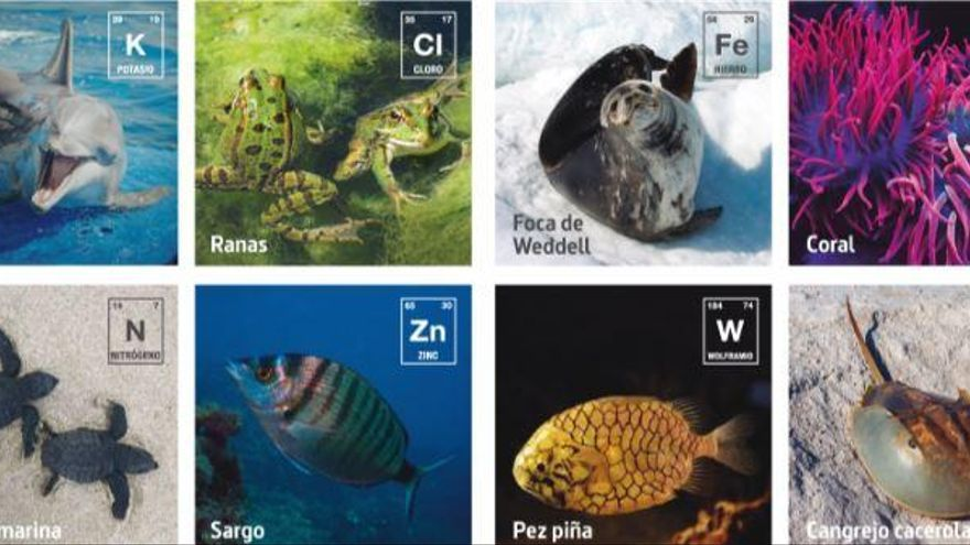 La taula periòdica dels elements i l'Oceanogràfic