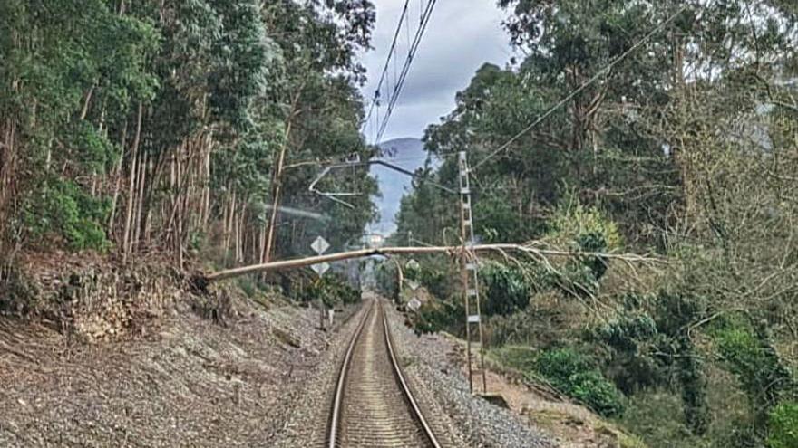 Un árbol caído en Arbo vuelve a cortar la línea férrea del Miño