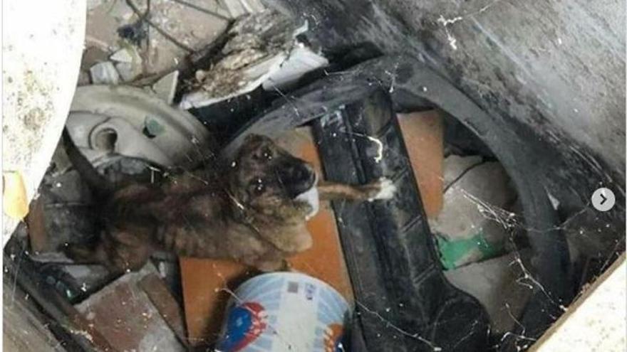 Demanen vuit mesos de presó per a un home acusat d'abandonar el seu gos en un magatzem de Manresa