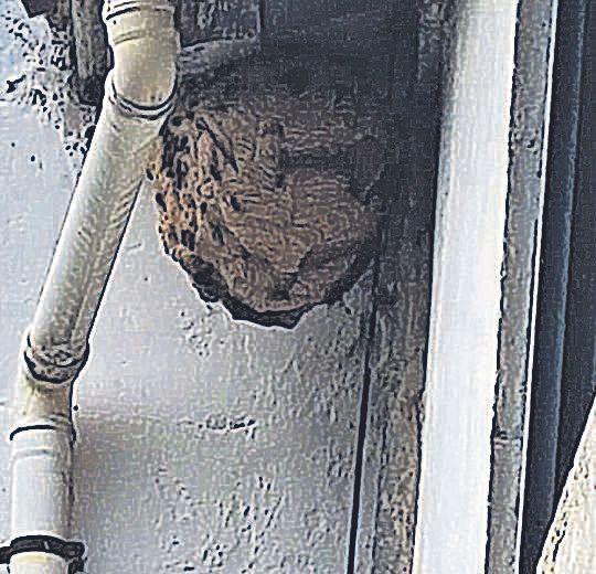 Un nido localizado en la comarca.
