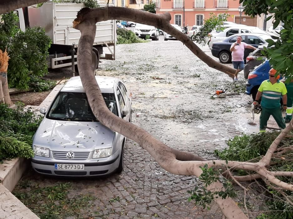 Un coche, aplastado por la rama de un árbol caída esta madrugada.