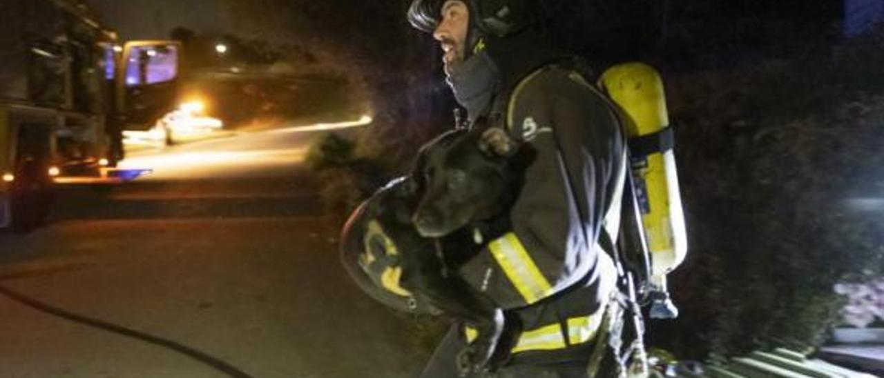 Un bombero saca a uno de los perros que lograron salvar